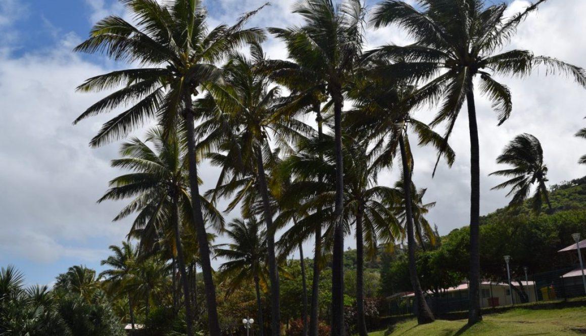 Mes trésors de voyage à la Réunion